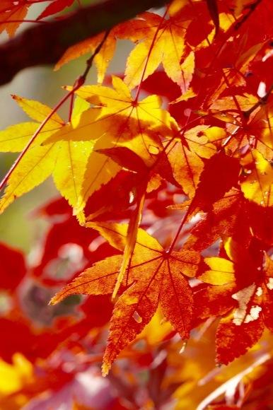 紅葉 。。。 ! !_a0248459_14394229.jpg