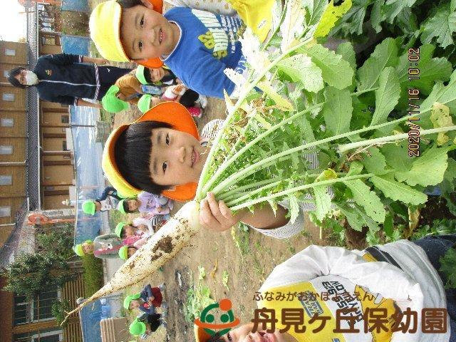 【ほし組】 大根の収穫 をしました!_f0367159_18482150.jpg