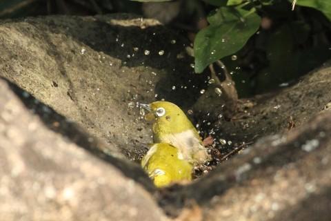 冬鳥も続々増えてきました★先週末の鳥類園(2020.11.14~15)_e0046474_23225714.jpg