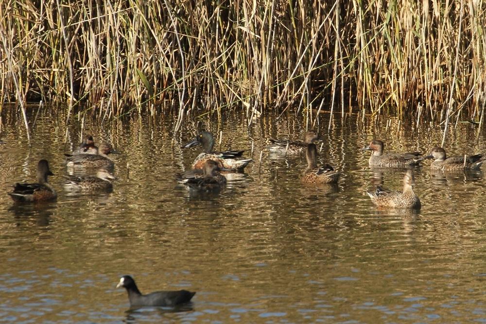 冬鳥も続々増えてきました★先週末の鳥類園(2020.11.14~15)_e0046474_23292282.jpg