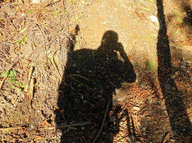 草紅葉の藤原岳天狗岩を歩く  SOTA#JA/SI-007_f0073587_16314087.jpg