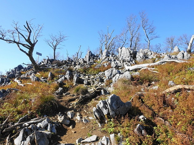 草紅葉の藤原岳天狗岩を歩く  SOTA#JA/SI-007_f0073587_17063595.jpg