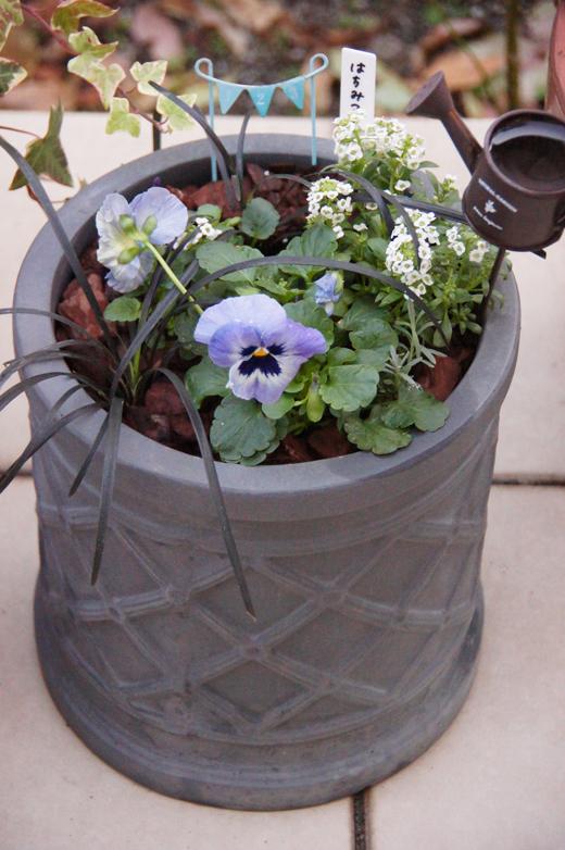 2020年冬(~春)の寄せ植え/活動量計、なかなかGoodです!_c0139591_16214110.jpg