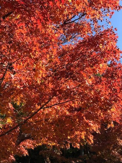 北山緑化植物園_c0138704_09015337.jpg