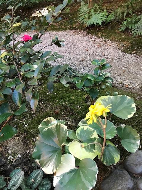 北山緑化植物園_c0138704_09020495.jpg