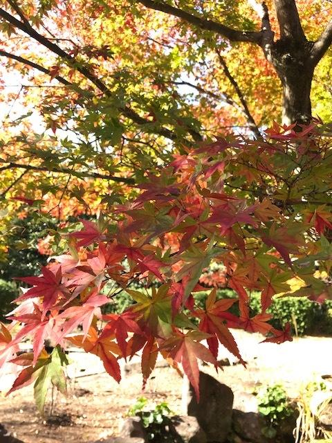 北山緑化植物園_c0138704_09021749.jpg