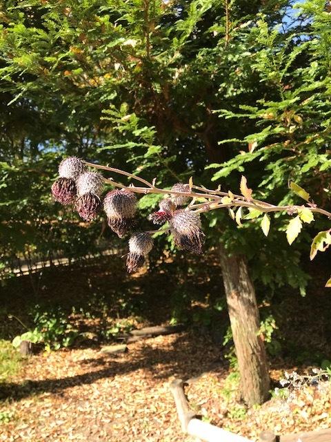 北山緑化植物園_c0138704_09023730.jpg
