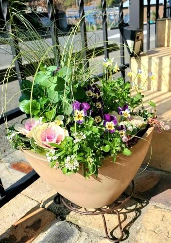 11月の庭の様子_e0338831_15313677.jpg