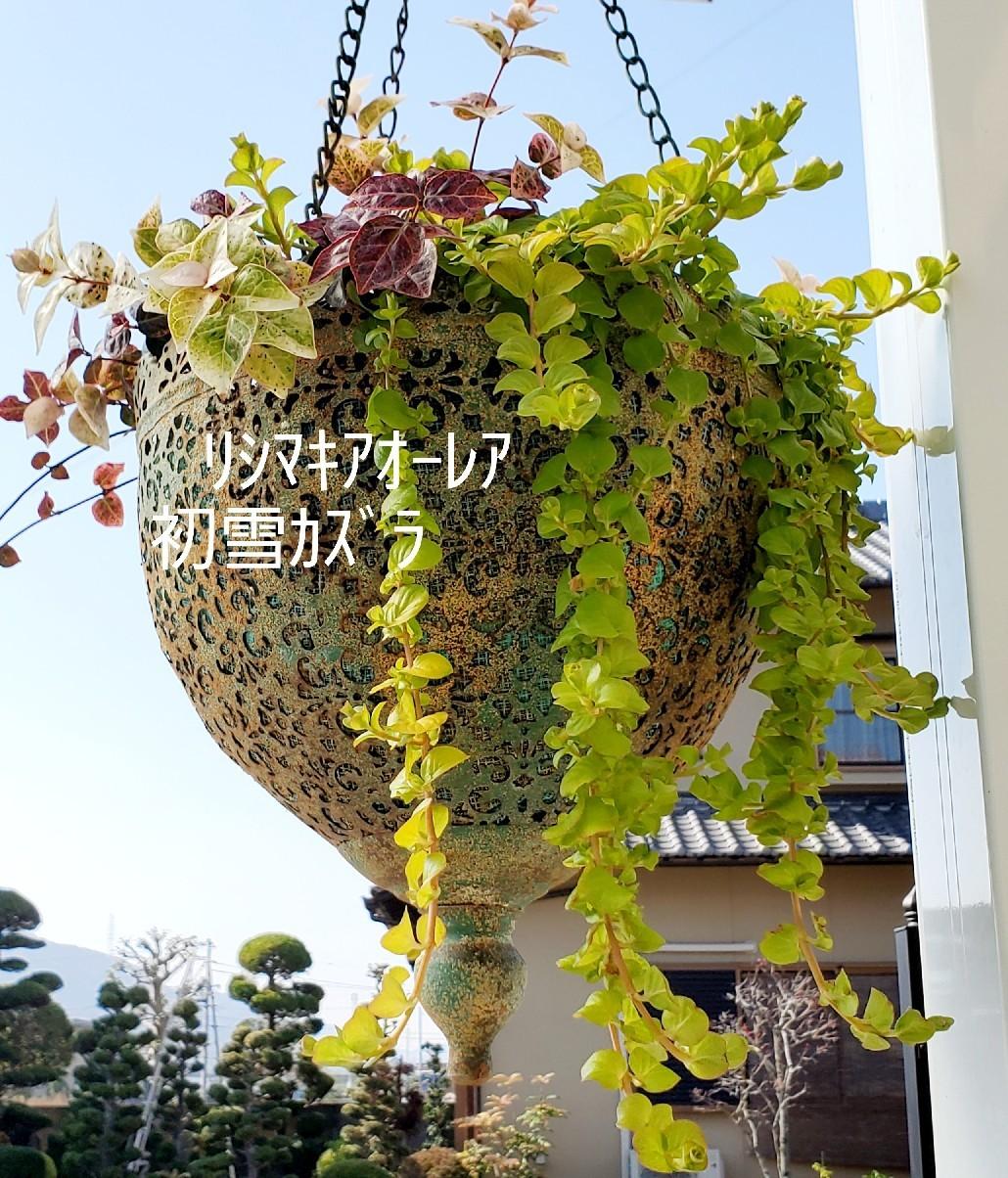 11月の庭の様子_e0338831_15355028.jpg