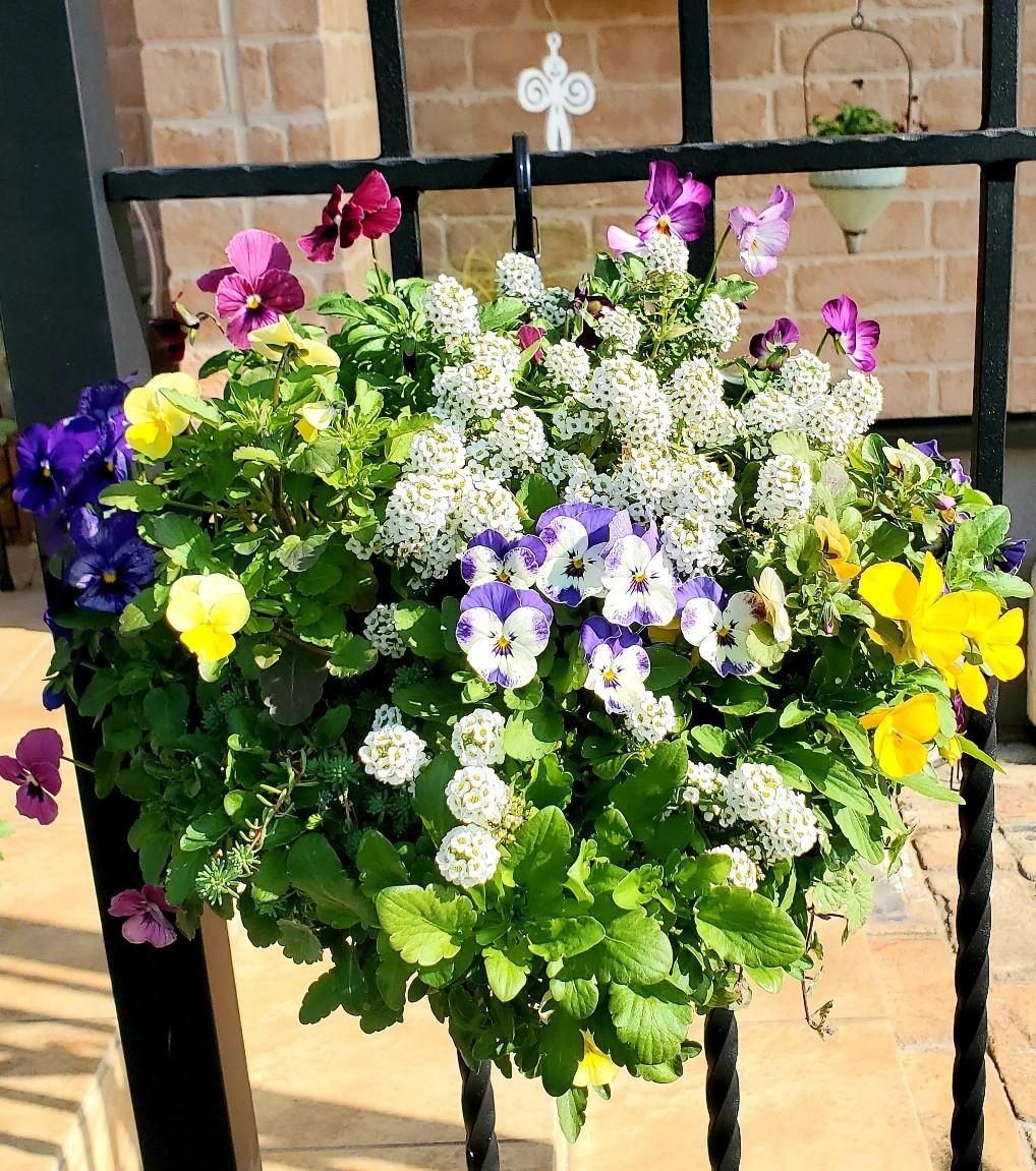 11月の庭の様子_e0338831_15435697.jpg