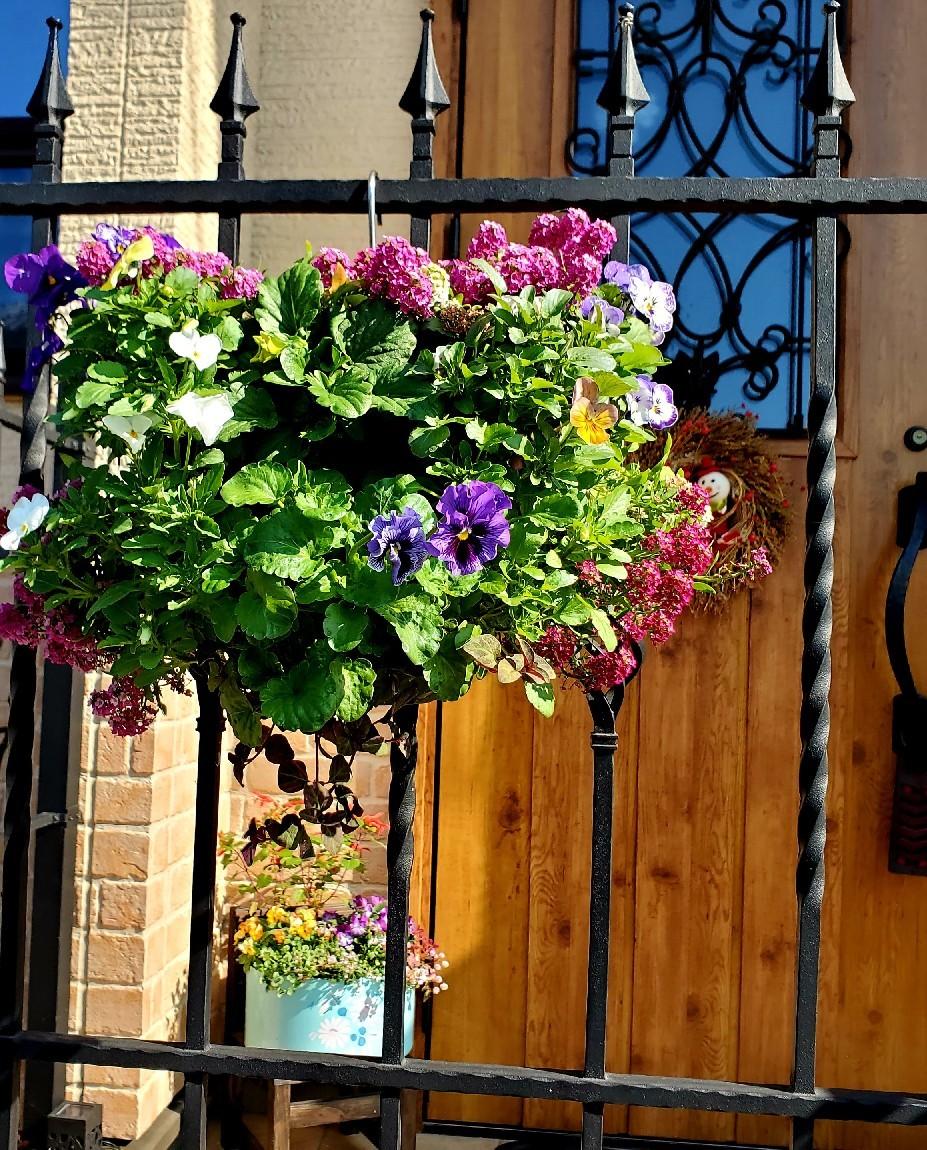 11月の庭の様子_e0338831_15435770.jpg