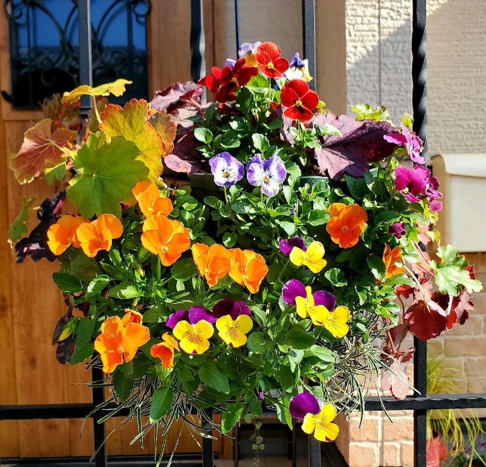 11月の庭の様子_e0338831_15435795.jpg