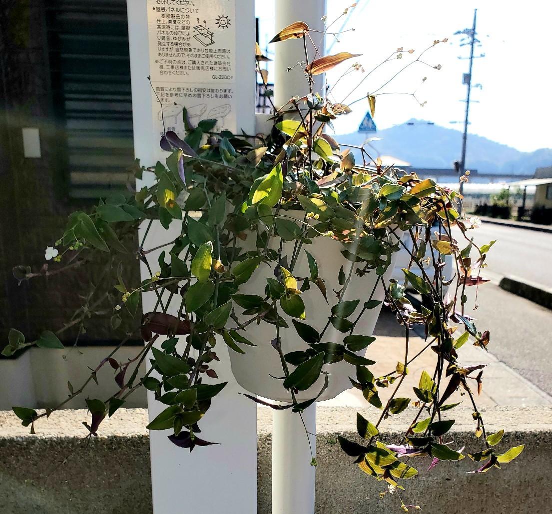 11月の庭の様子_e0338831_15480461.jpg