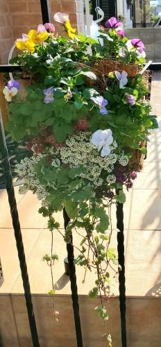 11月の庭の様子_e0338831_16011205.jpg