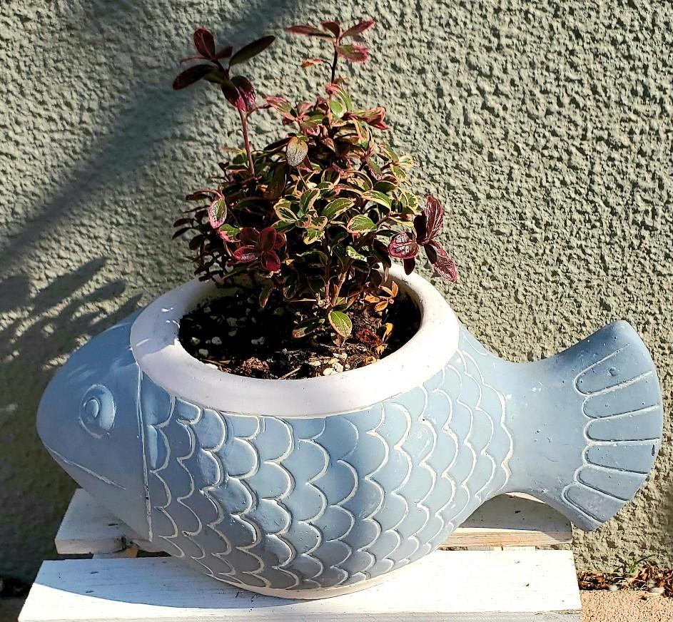 11月の庭の様子_e0338831_16033785.jpg