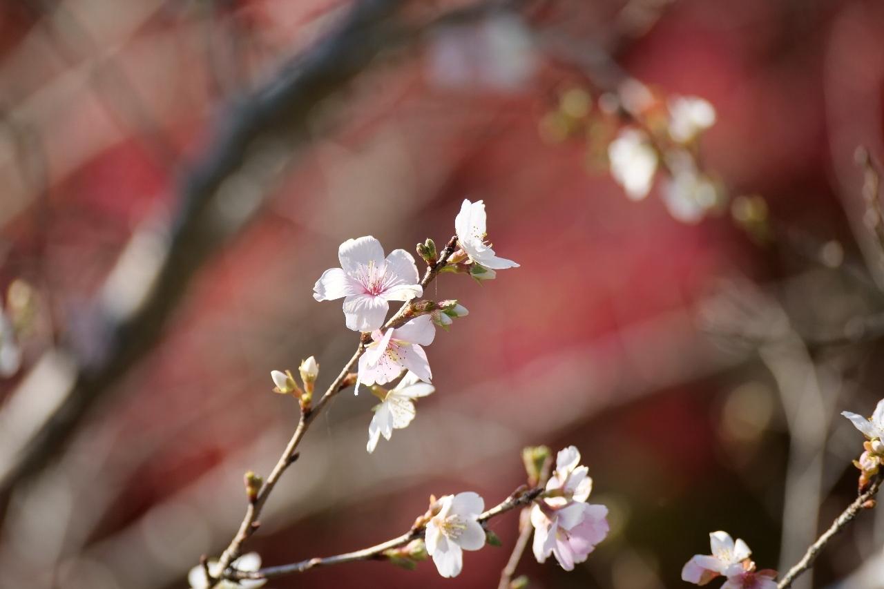 花見_c0343347_19430006.jpg