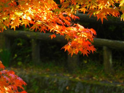 根来寺へ紅葉狩り_e0136066_23412593.jpg