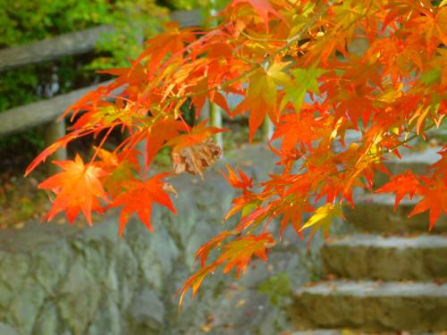 根来寺へ紅葉狩り_e0136066_23414084.jpg