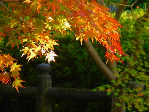 根来寺へ紅葉狩り_e0136066_23414463.jpg