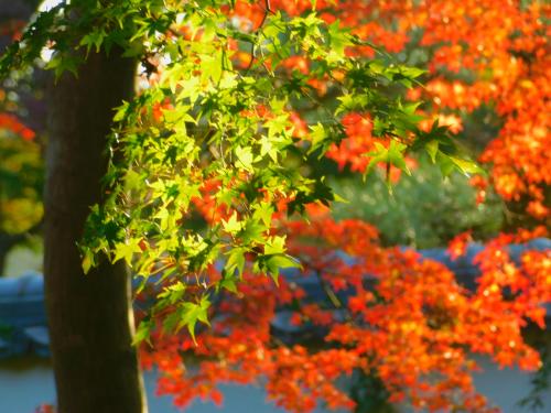 根来寺へ紅葉狩り_e0136066_23424454.jpg