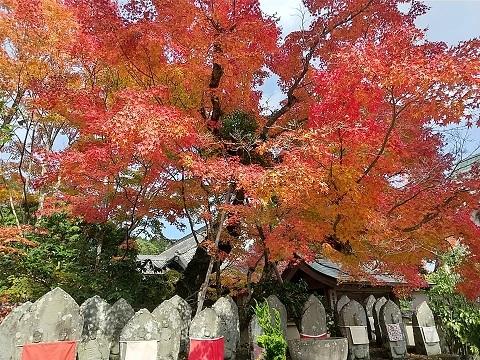 大山寺の紅葉_d0043390_22310842.jpg