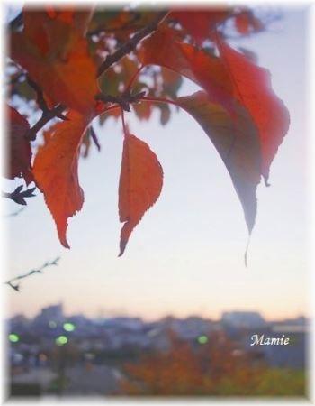 朝散歩 11/18_d0387712_09404305.jpg