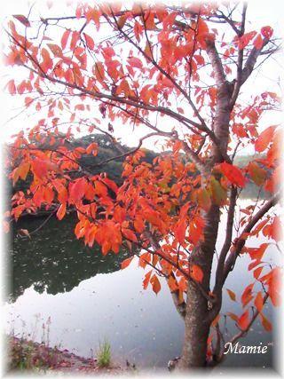 朝散歩 11/18_d0387712_09423421.jpg