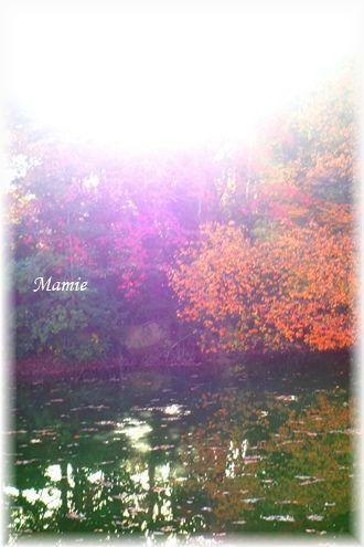 公園の水辺の紅葉 と 今朝の翡翠ちゃん_d0387712_10575046.jpg