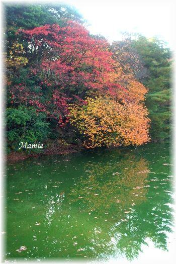 公園の水辺の紅葉 と 今朝の翡翠ちゃん_d0387712_10575267.jpg
