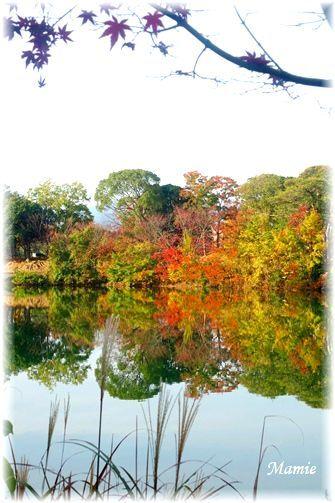 公園の水辺の紅葉 と 今朝の翡翠ちゃん_d0387712_10575798.jpg