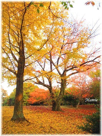 落ち葉の絨毯 赤と黄色のグラディーション_d0387712_22313524.jpg