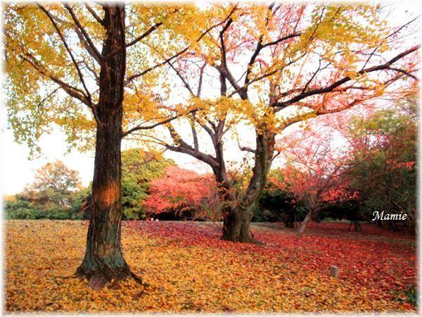 落ち葉の絨毯 赤と黄色のグラディーション_d0387712_22313826.jpg