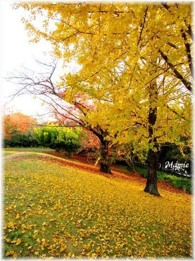 落ち葉の絨毯 赤と黄色のグラディーション_d0387712_22314334.jpg
