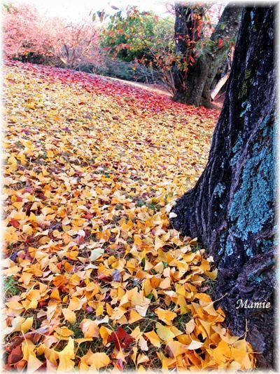 落ち葉の絨毯 赤と黄色のグラディーション_d0387712_22314653.jpg