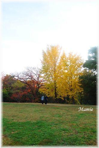 公園の銀杏の木_d0387712_22323862.jpg