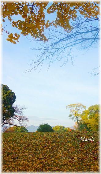 公園の銀杏の木_d0387712_22324674.jpg