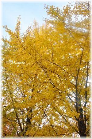 公園の銀杏の木_d0387712_22330304.jpg