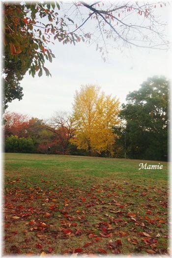 公園の銀杏の木_d0387712_22551157.jpg