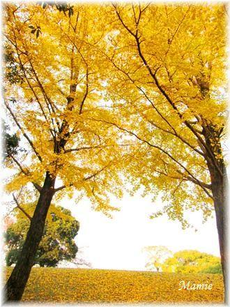公園の銀杏の木_d0387712_22554455.jpg