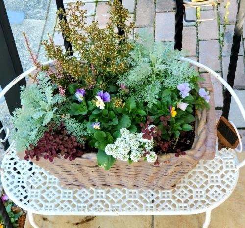 11月の庭の様子_e0338831_10171798.jpg