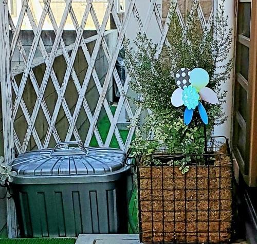 11月の庭の様子_e0338831_14055021.jpg