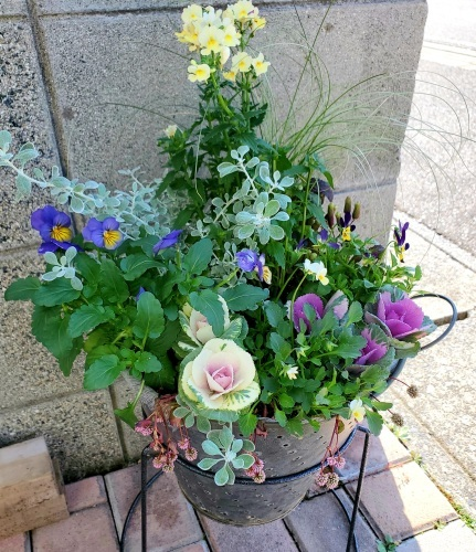11月の庭の様子_e0338831_17204624.jpg