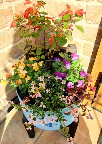 11月の庭の様子_e0338831_18390754.jpg
