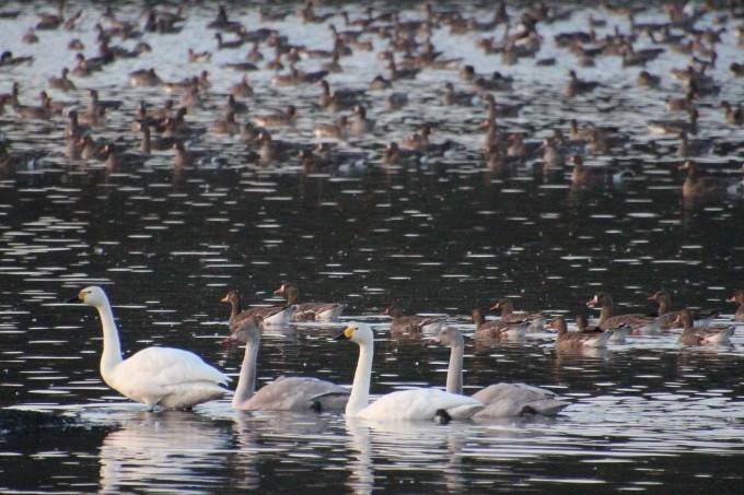 再び、「白鳥の湖」を訪れました。_b0238249_19442141.jpg