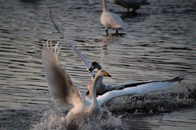 再び、「白鳥の湖」を訪れました。_b0238249_19541566.jpg