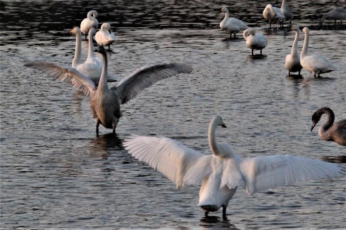 再び、「白鳥の湖」を訪れました。_b0238249_19545430.jpg