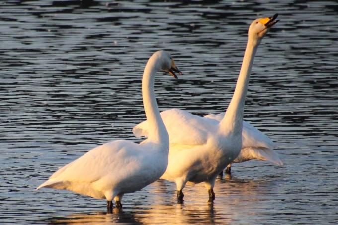 再び、「白鳥の湖」を訪れました。_b0238249_19572061.jpg