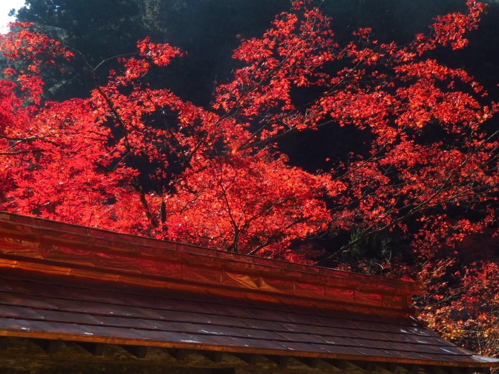 谷汲山の紅葉🍁 _a0018655_16572946.jpg