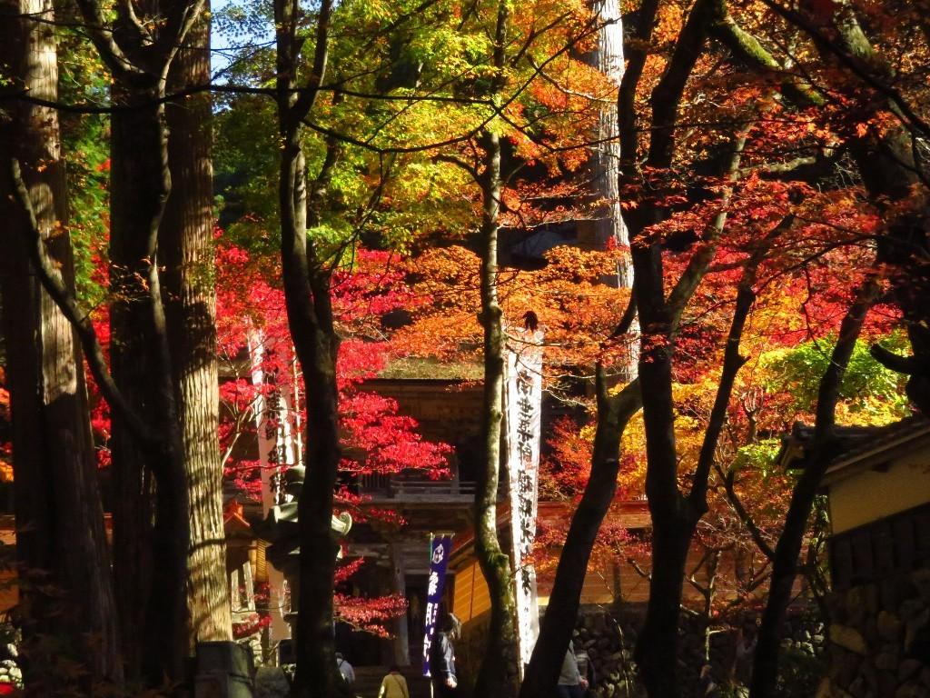 谷汲山の紅葉🍁 _a0018655_16572972.jpg