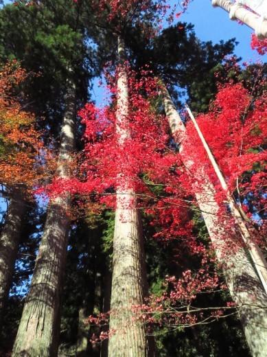 谷汲山の紅葉🍁 _a0018655_16573015.jpg